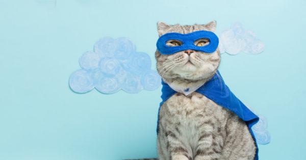 symbolisme des chats ch